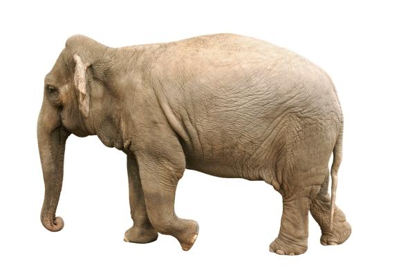 1 elefante branco