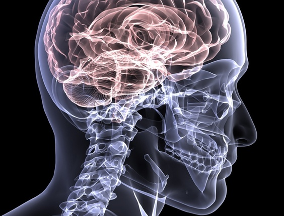 midia-indoor-ciencia-e-saude-humano-anatomia-osso-cerebro-cabeca-inteligencia-conhecimento-medicina-medico-mente-fisico-raio-x-radiologia-esqueleto-estrutura-pensamento-pensar-1272379713120_564x430