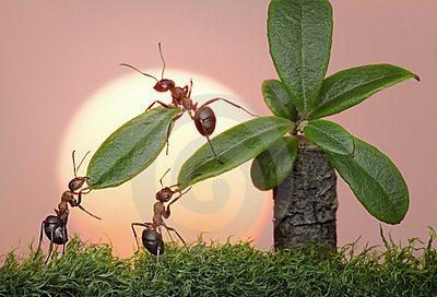 las-personas-de-hormigas-trabajan-